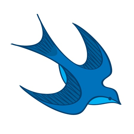 swallow bird: Swallow blue bird wing feather nature barn