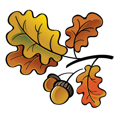 oak leaves: Oak leaves and acorns - autumn nature
