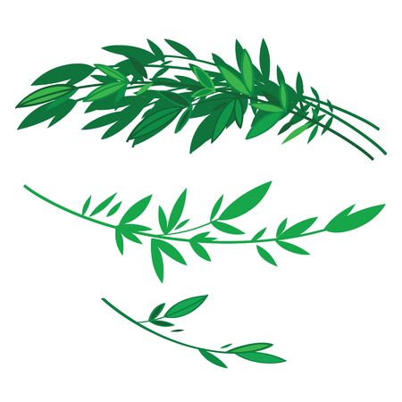 brushwood: Tree branches with green leaves - nature