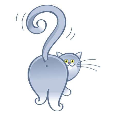 domestic animal: Question cat - domestic animal, tail in the shape of a question mark