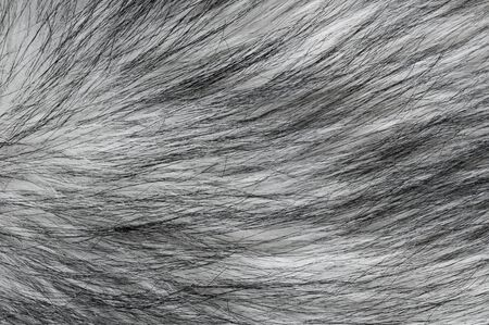 faux: Texture of black and white faux fur