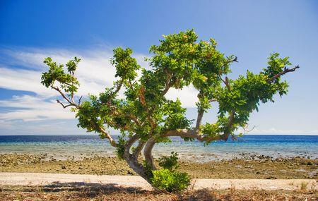 Tree Tree on the tropical beach. Pemuteran beach on Bali island. Indonesia Stock Photo