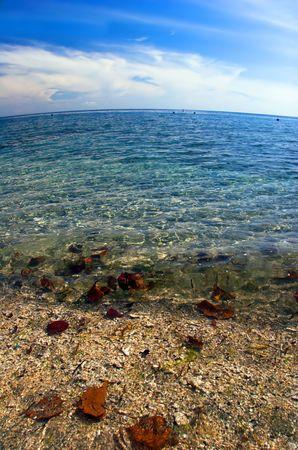 Swimming leafs in the sea. Near the beach on Koh Mak island. Kingdom Thailand. photo