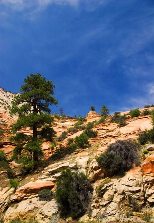 Slopes of Zion canyon. Utah state. USA Stock Photo - 4653338