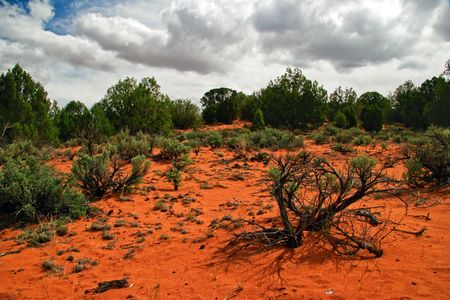 american field service: Landscape near Pink Sand Dune. It is photographed on Pink Sands Dune. Utah. USA