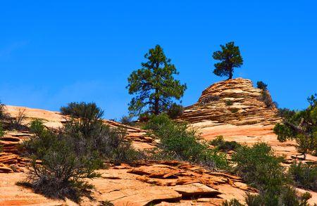 Slopes of Zion canyon. Utah. USA. photo