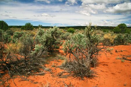 Landscape near Coral Pink Sand Dune National Park. Utah. Stock Photo - 5394673
