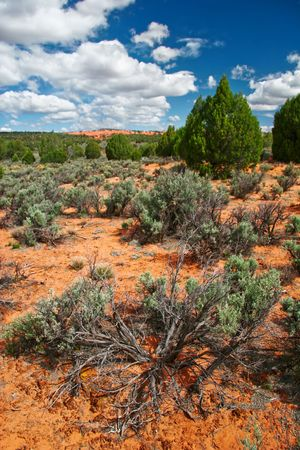 Landscape near Coral Pink Sand Dune National Park. Utah. Stock Photo - 5394736