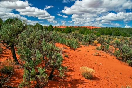 Landscape near Coral Pink Sand Dune National Park. Utah. USA Stock Photo - 5394722