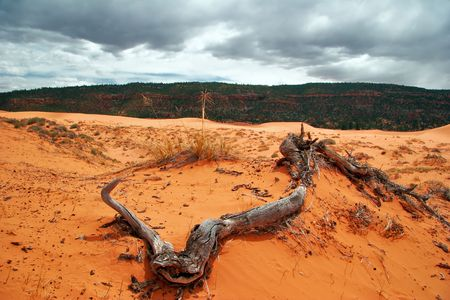 american field service: Landscape near Coral Pink Sand Dune National Park. Utah. USA Stock Photo