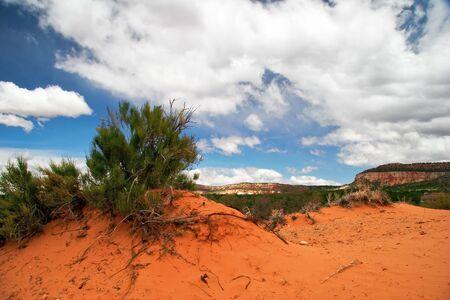 Landscape near Coral Pink Sand Dune National Park. Utah. USA Stock Photo - 5394653