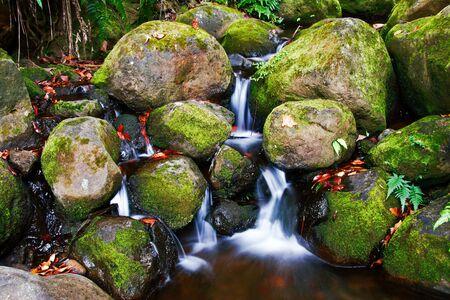 Creek in jungle of Hawaii Stock Photo