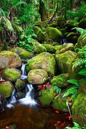 Small creek in the jungle of Big island. Hawaii. USA Stock Photo - 6016820
