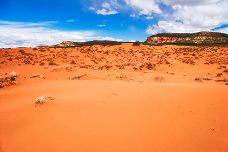 In the Coral Pink Sand Dune National park. Utah. USA photo