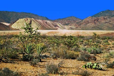 Desert of Arizona state photo