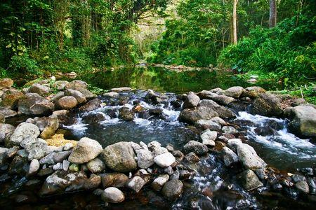 Small creek in the jungle of Big island. Hawaii. USA Stock Photo - 6033000