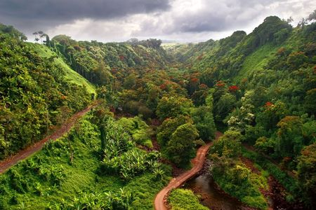 national forest: Hawaiian Jungle. Big island. USA Stock Photo