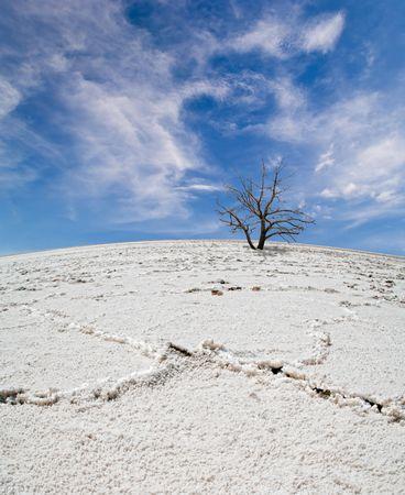 Lifeless tree in the salt desert under blue sky photo