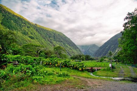 mounts: Mounts and jungle in foggy weather. Big island. Hawaii. USA Stock Photo
