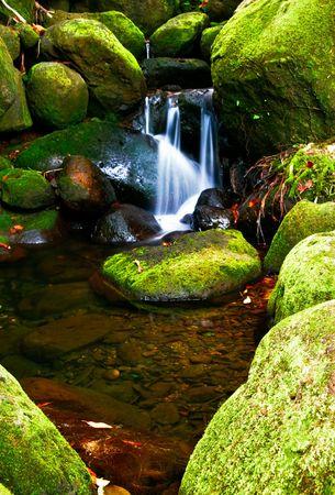 Small creek in the jungle of Big island. Hawaii. USA Stock Photo - 6061858