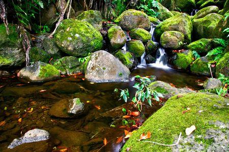 Small creek in the jungle of Big island. Hawaii. USA Stock Photo - 6061188