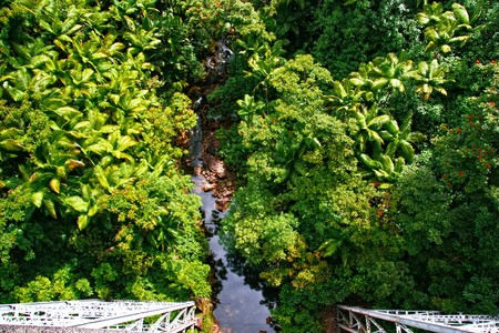 Small creek in the jungle, view from top. Big island. Hawaii. USA Stock Photo - 7466768