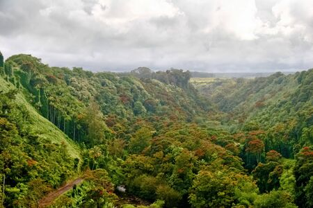 mounts: Mounts and jungle in foggy weather. Big island. Hawaii. USA