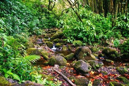 Small creek in the jungle of Big island. Hawaii. USA  Stock Photo - 7466767