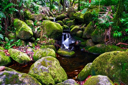 Small creek in the jungle of Big island. Hawaii. USA  Stock Photo - 7466769