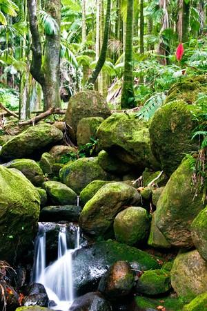 Small creek in the jungle of Big island. Hawaii. USA Stock Photo - 7466713