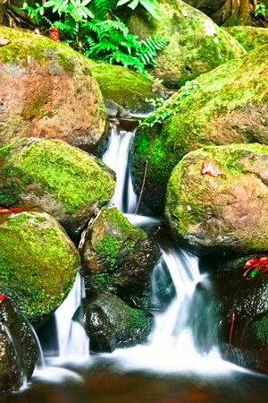 Small creek in the jungle of Big island. Hawaii. USA  Stock Photo - 9202576