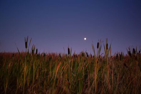 nightly landscape with the image of Lunar Stock Photo - 7619907
