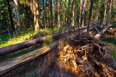 environmen: Summer forest in sunny weather  Stock Photo