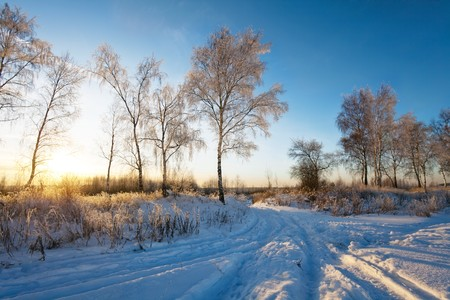 winter landscape with sun rays