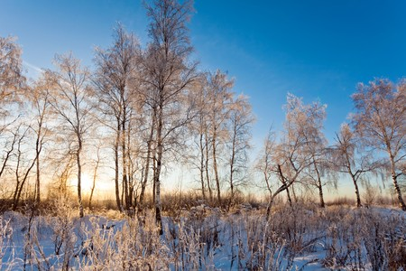sunset in winter field.  photo