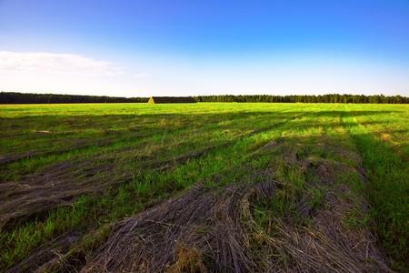 Summer field under blue sky  Stock Photo - 8021856