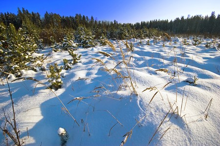 Winter field under blue sky  Stock Photo - 8020635
