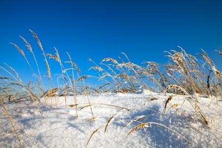 Winter landscape on blue sky background  photo