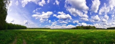 Stitched Panorama of green summer field  Stock Photo