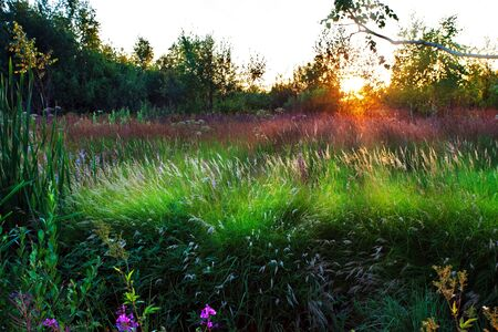 Sunset in summer field  Stock Photo - 8388746