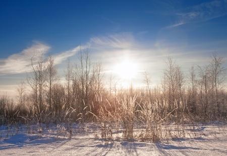 Winter field under blue sky