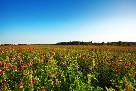 Summer field with flowers under blue sky Stock Photo - 8683880