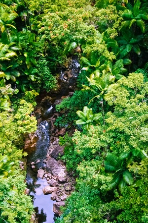 Small creek in the jungle of Big island. Hawaii. USA Stock Photo - 9580152