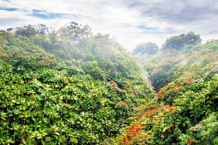 Mounts and jungle in foggy weather. Big island. Hawaii. USA Stock Photo - 9580149