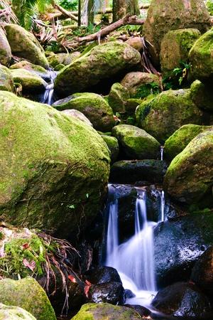 Small creek in the jungle of Big island. Hawaii. USA Stock Photo - 9580151