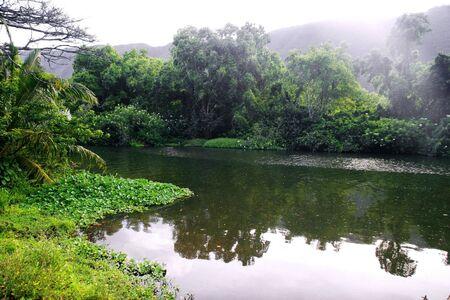 Mounts and jungle in foggy weather. Big island. Hawaii. USA  Stock Photo - 9632656