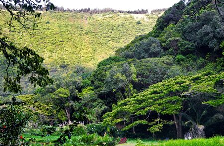 Mounts and jungle in foggy weather. Big island. Hawaii. USA Stock Photo - 9632675
