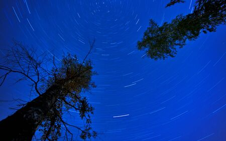 Star Trails in the night with silhouettes of trees photo