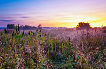 Coloful sunset in summer field with fog photo