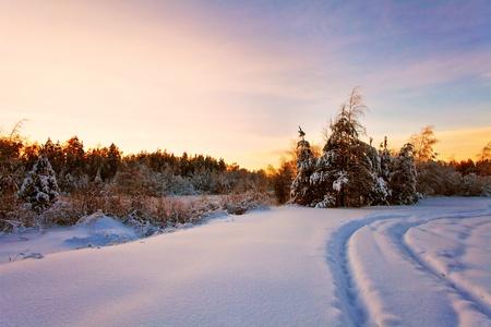 january sunrise: Puesta de sol de invierno cerca del bosque Foto de archivo